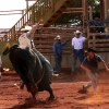 Bull Ride, Molokai Ranch Rodeo, photo by Mark Kailana Nelson