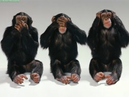 Wise chimps